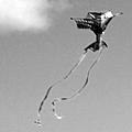 trio with a kite